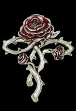 Alliance Rose