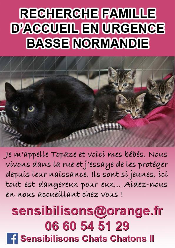 BASSE-NORMANDIE : chatte et 3 bb : FALD / ASSO OU ADOPTANT  Topaze11