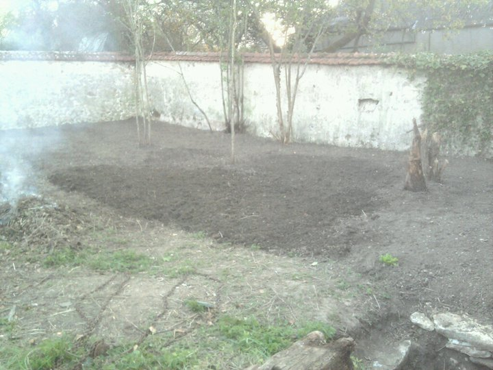 mon ptit jardin Bechag10