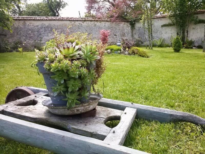 mon ptit jardin Cam00311