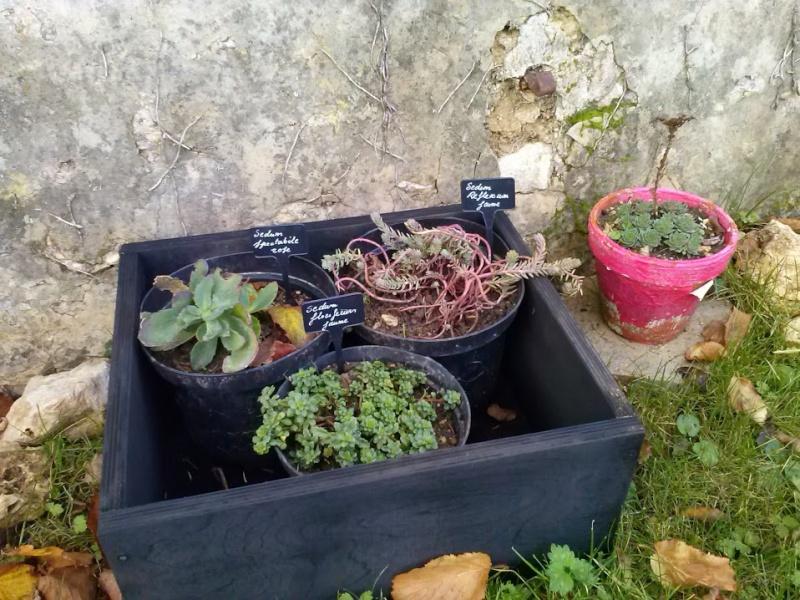 mon ptit jardin Cam00813