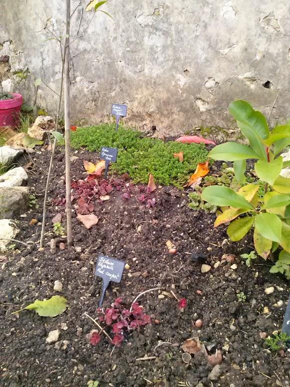 mon ptit jardin Cam00816