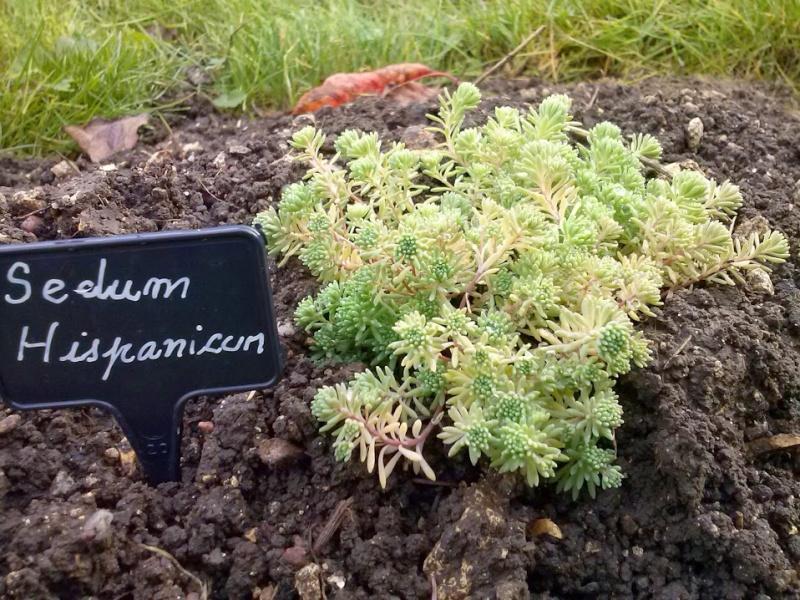 mon ptit jardin Cam00818