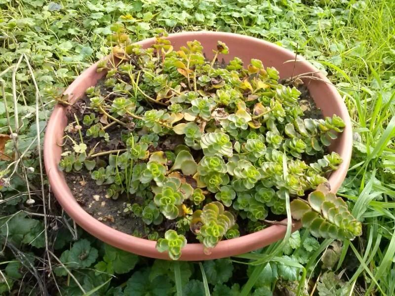 mon ptit jardin Cam00823