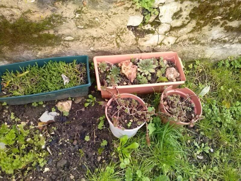 mon ptit jardin Cam00824