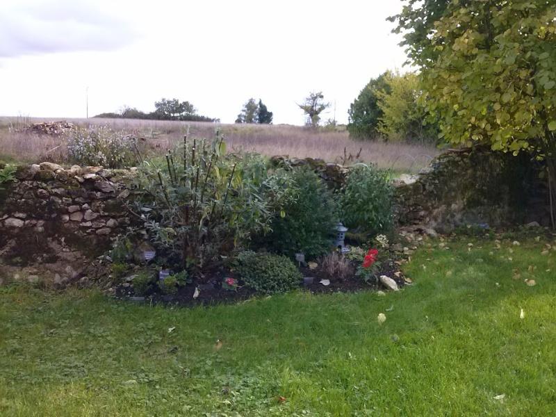 mon ptit jardin Cam00825