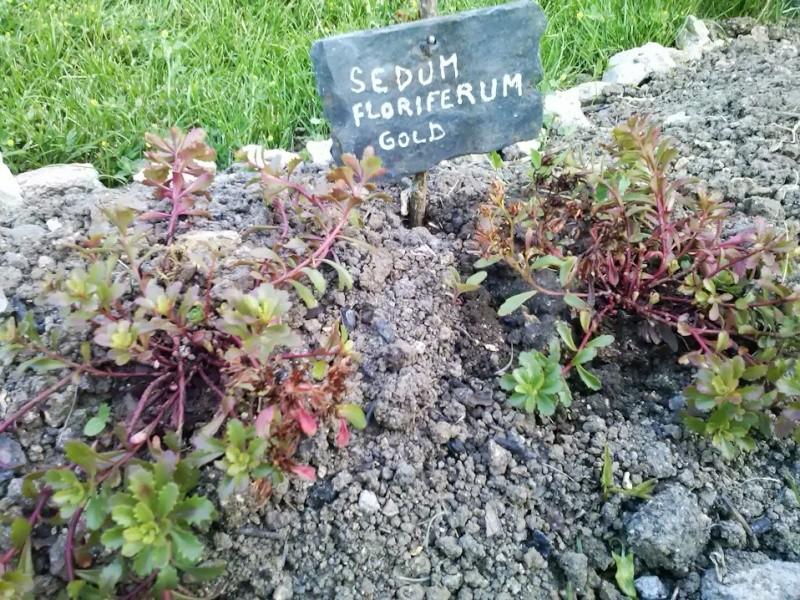 mon ptit jardin Florif10