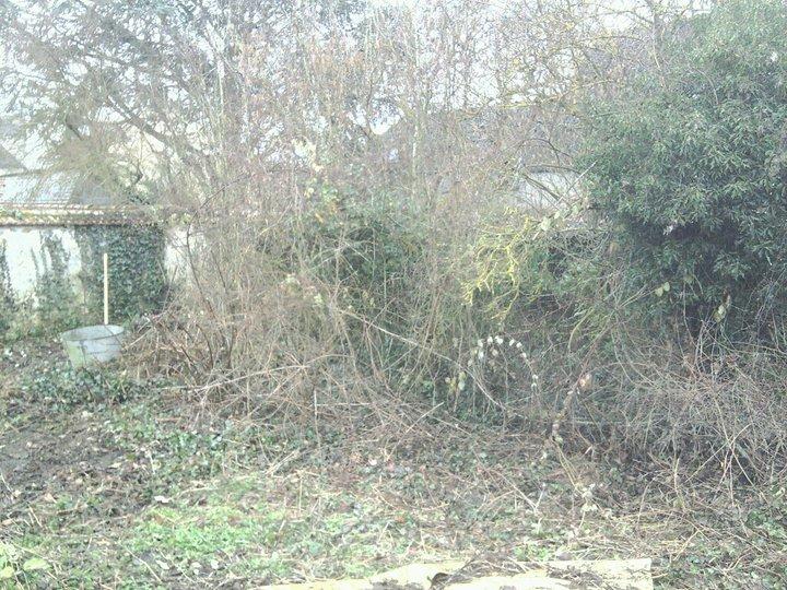 mon ptit jardin Jardin11