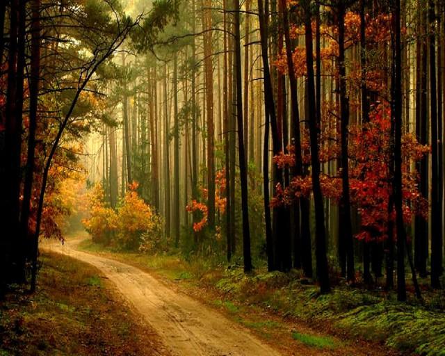 Background behind a photo Autumn10