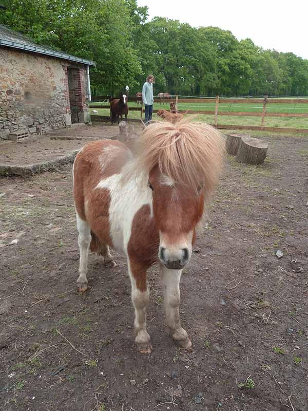 TAGADA - ONC poney typé Shetland né en 2008 - adopté en août 2013 - Page 2 2_taga10