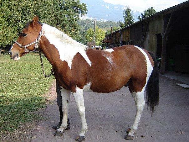 PEPITO - ONC né en 2004 - gardé par sa propriétaire 73-hon11