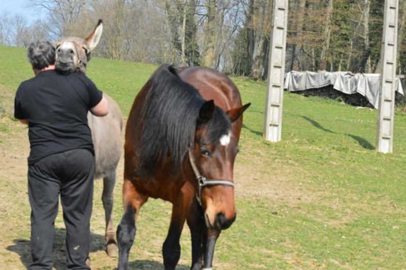 SAMARA - TF née en 2006 (DCD janvier 2019)  et OSCAR - âne né en 2003 - adoptés en mars 2012 par Maxime Dsc_4719