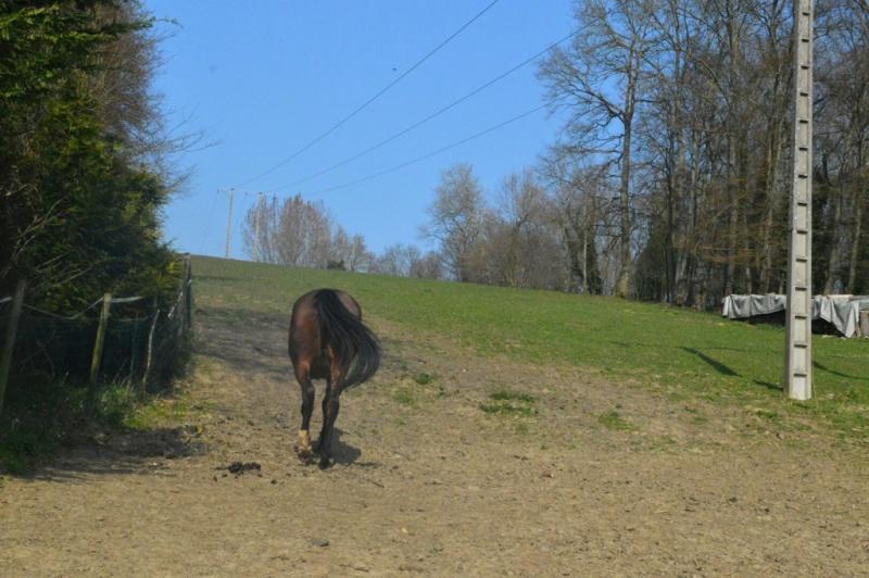 SAMARA - TF née en 2006 (DCD janvier 2019)  et OSCAR - âne né en 2003 - adoptés en mars 2012 par Maxime Dsc_4720