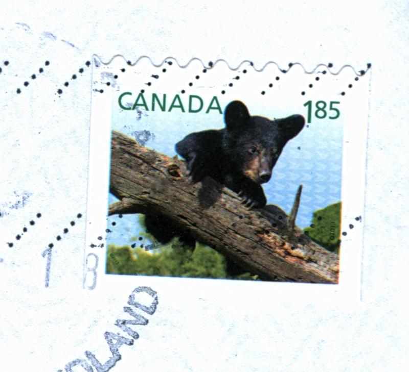Bären Baren10