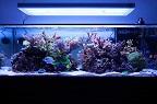 Aquariofilia --- Mundo dos Aquários Img_8710