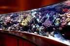 Água Salgada Reef-t10