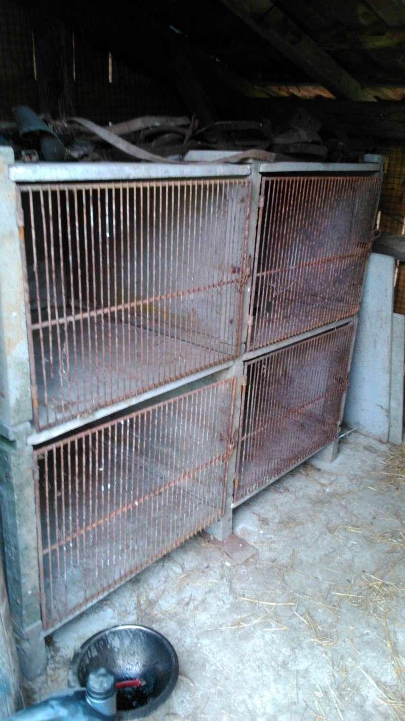 Présentation de l'élevage de Boris54  Installations fini  !  - Page 14 Dsc_0010