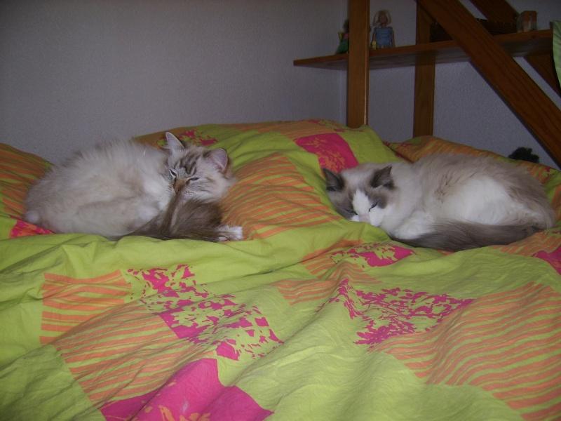 À qui appartient votre lit ? Vous ou votre chat ? Ssa52410