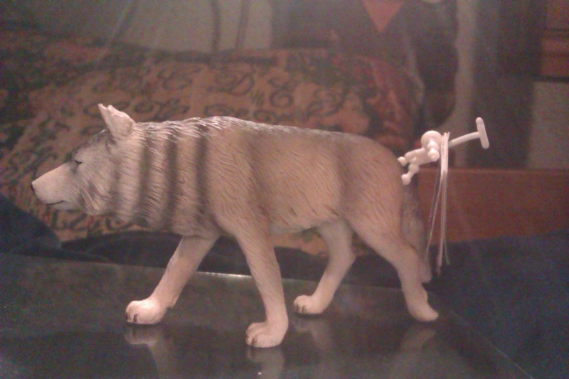 Hunting wolf, my First Mojo Fun figure! Imag5410