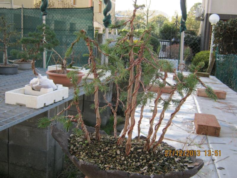 Piccola pineta Cascat10