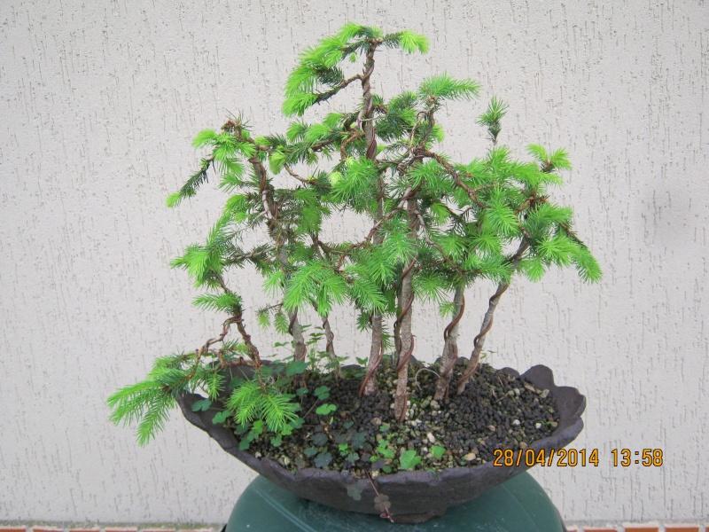 Piccola pineta Primav13