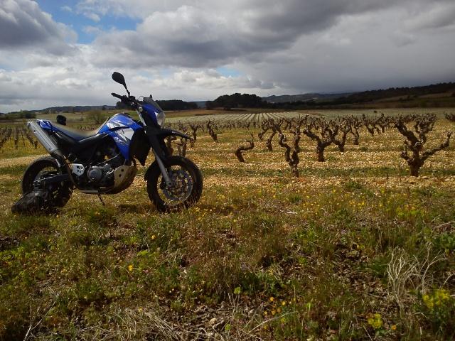 Vos plus belles photos de moto - Page 38 Dsc03711