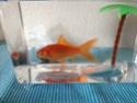 Lucas le poisson rouge en attente... Img_5610