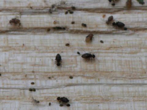 Insecte Dans Le Bois De Chauffage