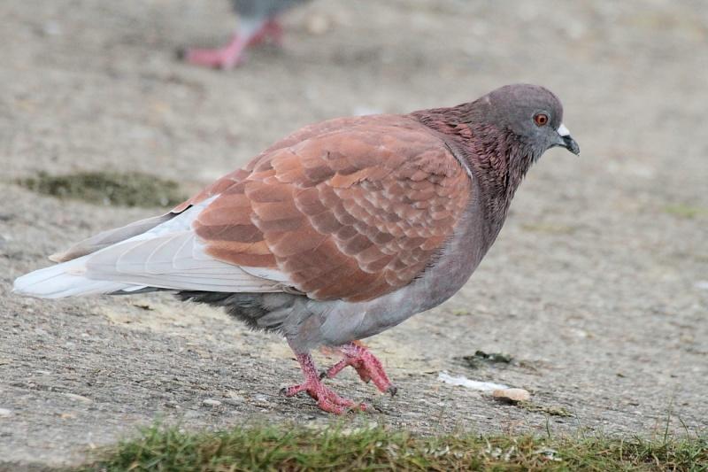 Sortie Oiseaux  0_110