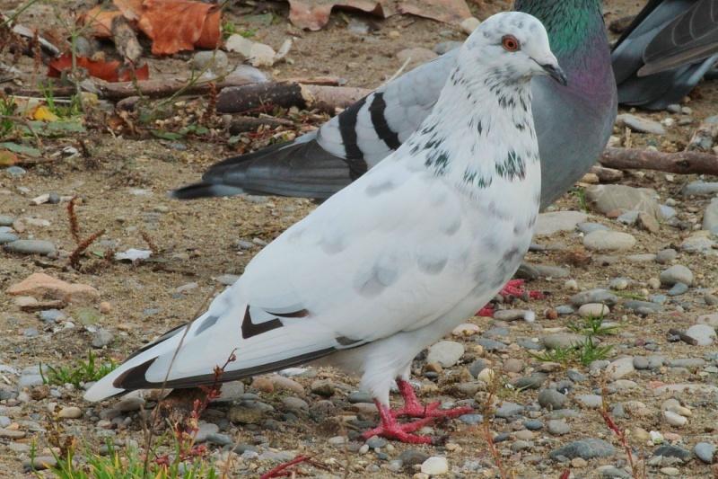 Sortie Oiseaux  0_1712