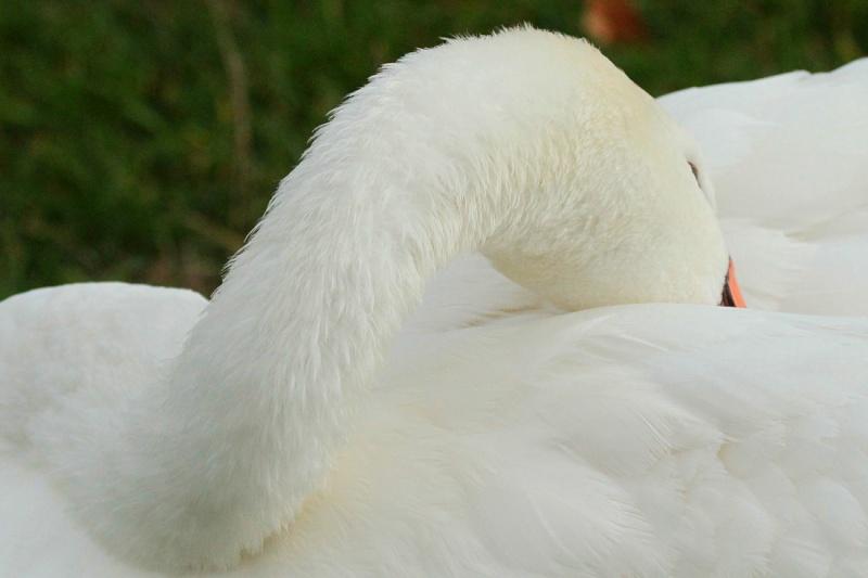 Sortie Oiseaux  0_211