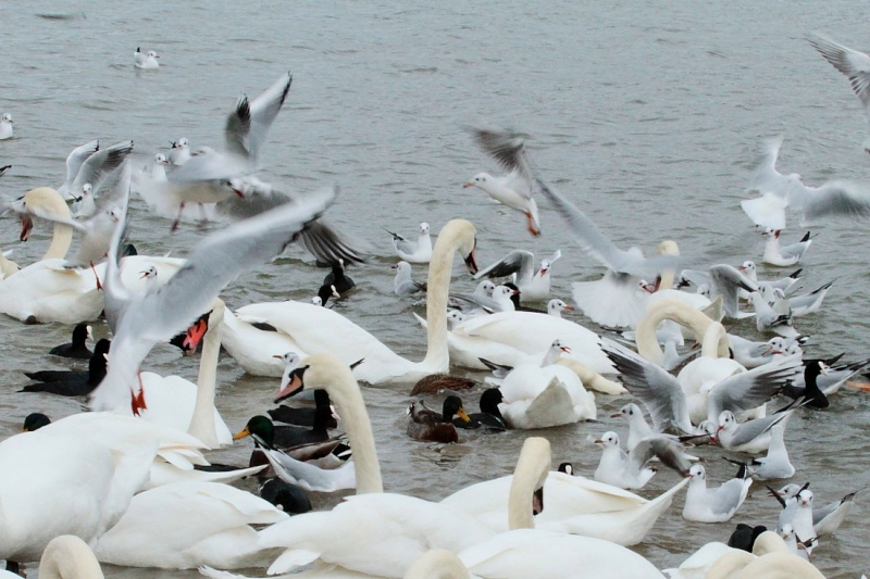 Sortie Oiseaux  0_3112