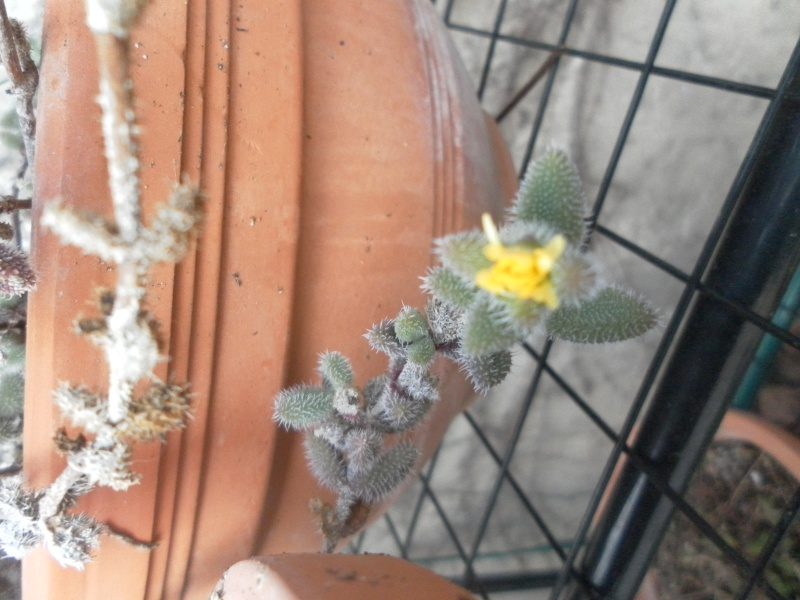 bientot des fleuraisons Sam_0712