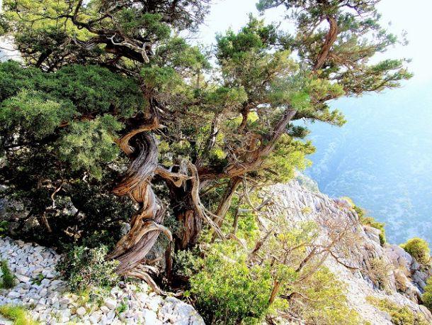 Quale delle due arti di fare bonsai condividete ed apprezzate di piu' ? 273810
