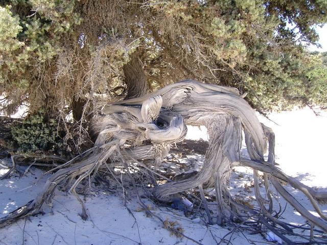 Quale delle due arti di fare bonsai condividete ed apprezzate di piu' ? Immagi18