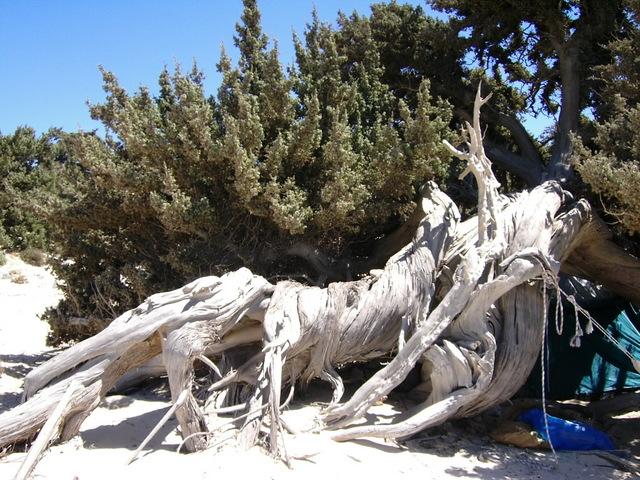 Quale delle due arti di fare bonsai condividete ed apprezzate di piu' ? Immagi19