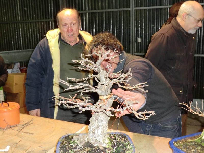 Piegatura di un grosso ramo al Bonsai Club Laudense - Pagina 2 Ma_mag10