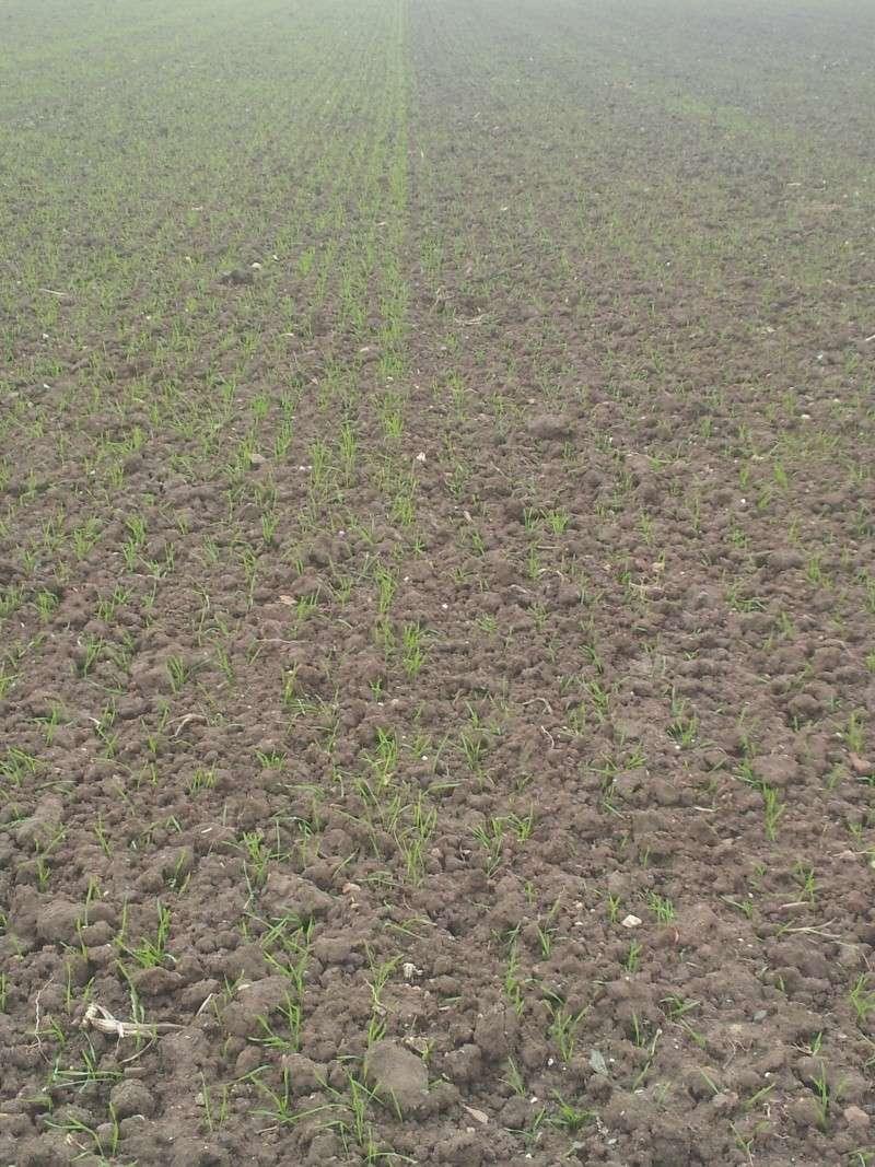 triage et traitement semence blé de ferme  - Page 4 20131110