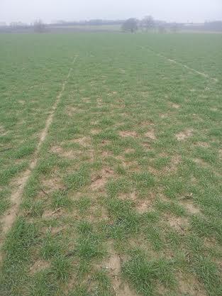 semis de blé 2013-2014 Borega10