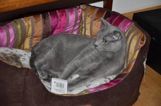 E'Sethi Accuente, le chaton voyageur - Page 12 Dsc_2012