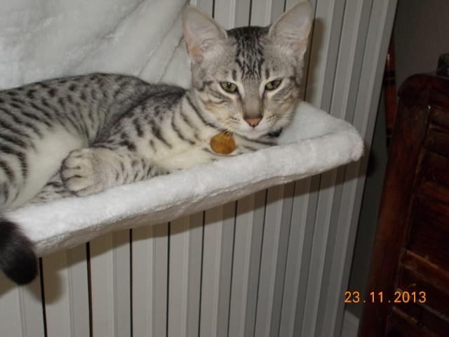 E'Sethi Accuente, le chaton voyageur - Page 13 Dscn5110