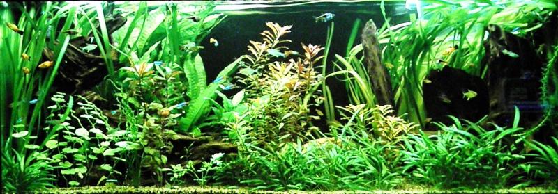 Aquarium Philippe02100 P2150851
