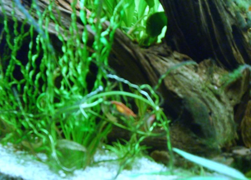 Aquarium Philippe02100 S5001967