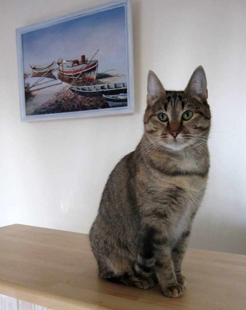 FINOUK, chatte tabby fauve, née le 01/10/2010 Finouk25