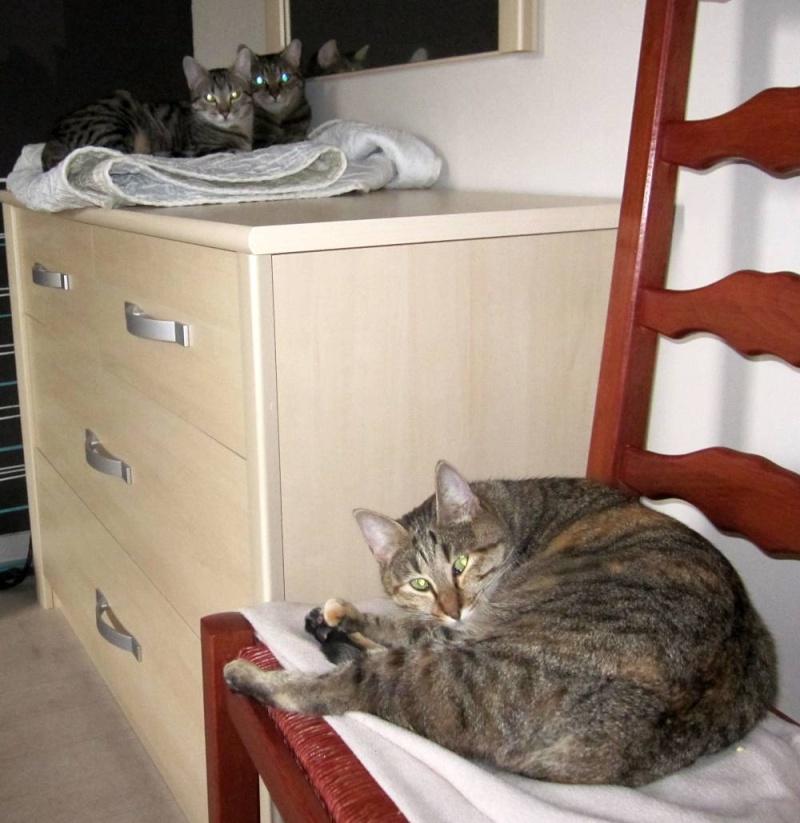 FINOUK, chatte tabby fauve, née le 01/10/2010 Finouk27