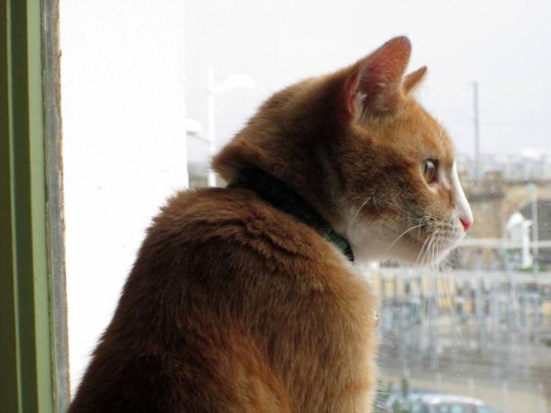 Hemingway, mâle roux et blanc né le 29/07/2012, en don libre Heming14