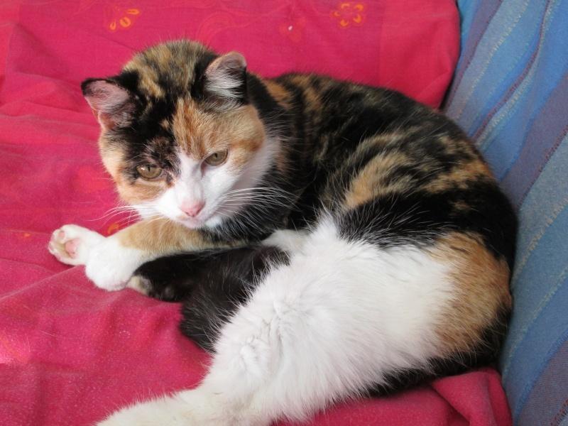 Tatoune, femelle type européen, tricolore, née le 01/03/2002 en don libre Img_1112