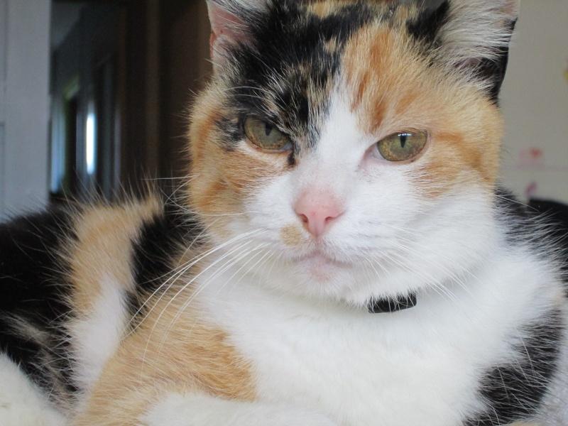 Tatoune, femelle type européen, tricolore, née le 01/03/2002 en don libre Img_1119