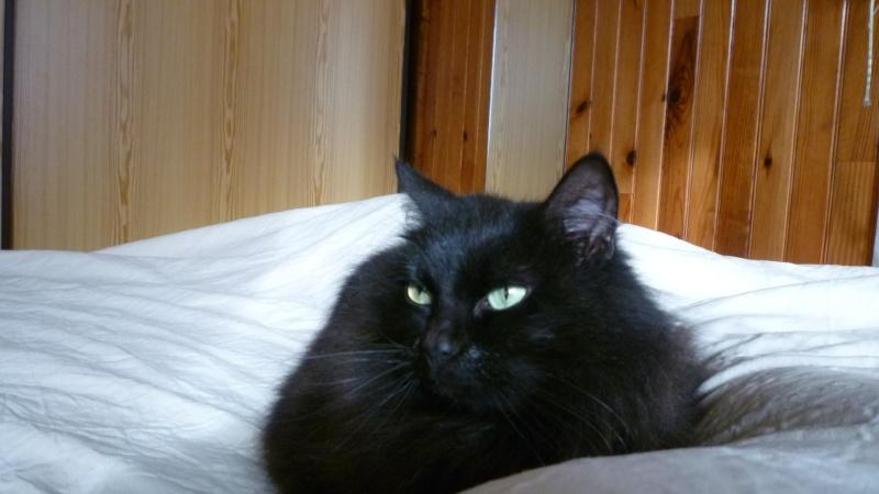 EXQUISE, chatte européenne noire à poils longs, née le 01/12/2009 P1050413
