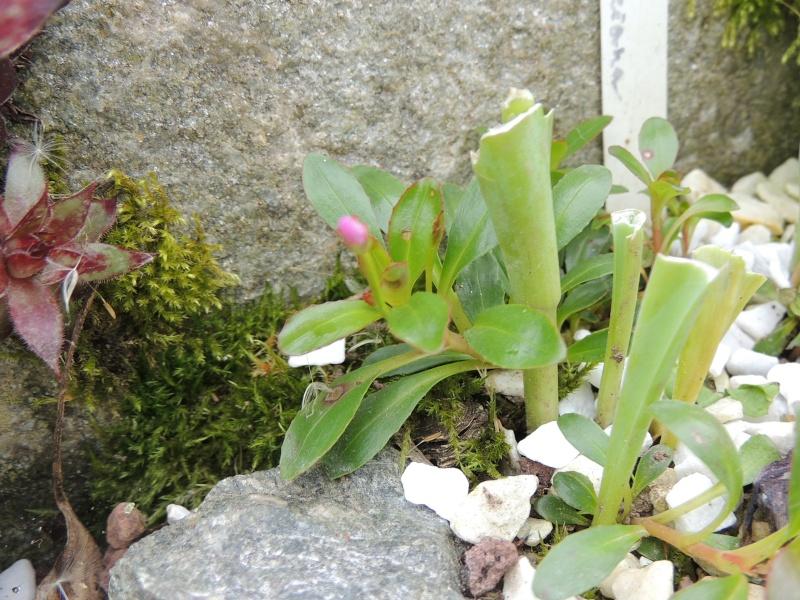 ma petite rocaille Photo_20